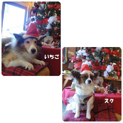 2013-12-87.jpg