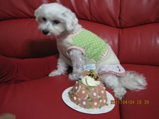 ケーキ怖い