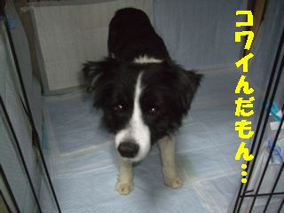 DSCF668888.jpg