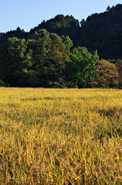 森と田んぼ