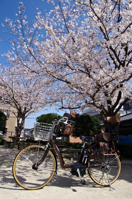 桜とラフィーニ