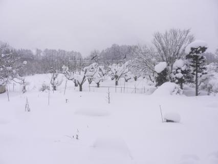 テラスから見た淨心庵冬景色