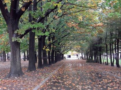 アカナラ円山公園