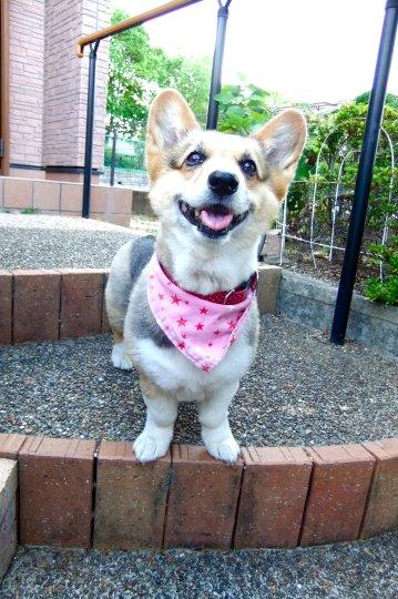 笑顔が可愛いみかんちゃん♪