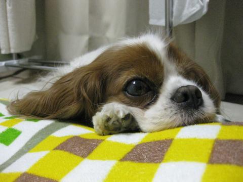 2010_0428_ラリーくん枕?
