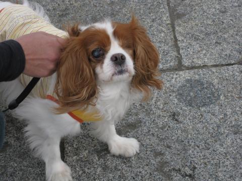 2010_0530_ラリー君in横浜?