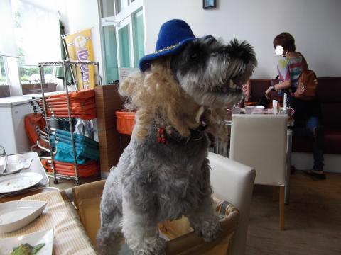 ブルー帽子キンパ
