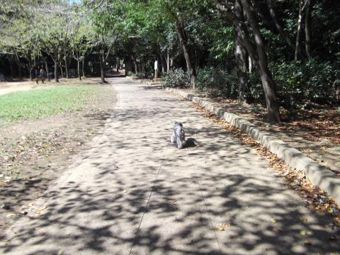 貝柄山公園