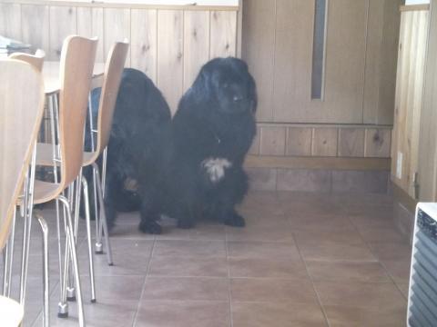 DogCafe168