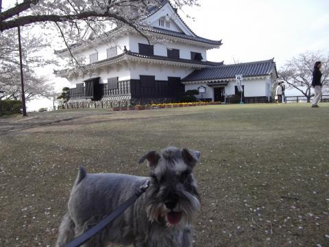 館山城にてウィル