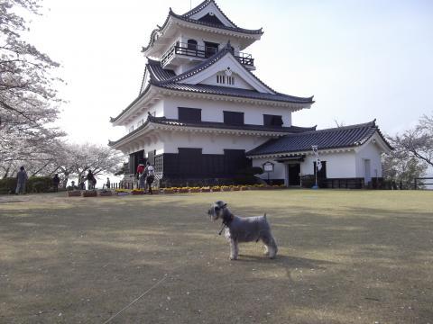 館山城ウィル