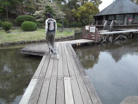 千葉公園の池