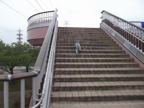 ウィル階段