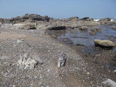 中生代白亜紀層