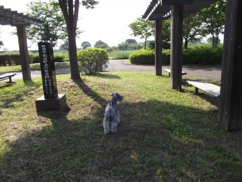関宿城公園にてウィル