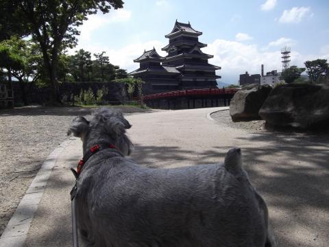 松本城にてウィル