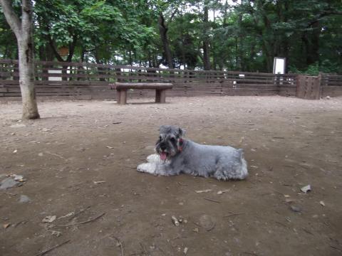 金川の森ドッグラン