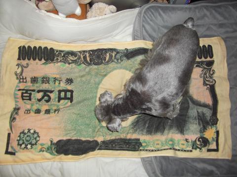 出歯銀行 百万円 タオル