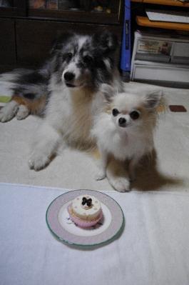 3ケーキを前に