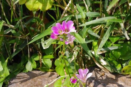3可愛いお花