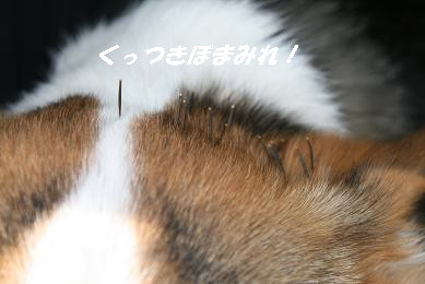 1_1392.jpg