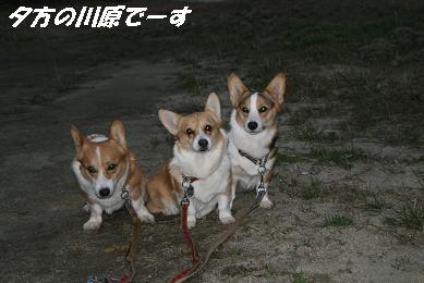 1_2012.jpg