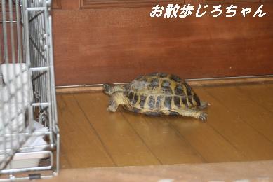 G_1663.jpg