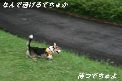 G_6208.jpg
