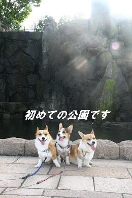 G_8216.jpg