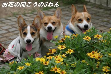 G_8576.jpg