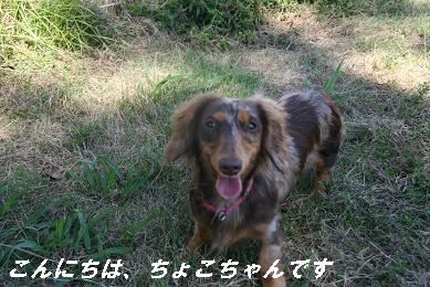 G_9393.jpg