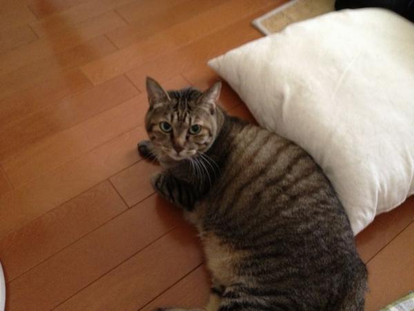 兄宅の猫ちゃん1号