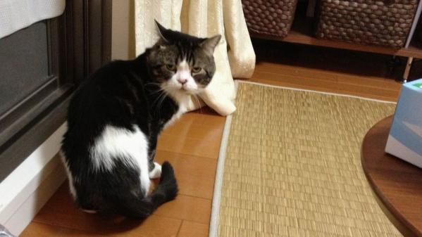 ブサ可愛いネコちゃん