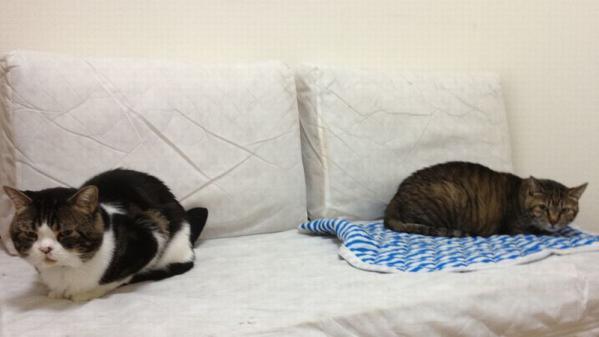微妙な距離のネコちゃんたち