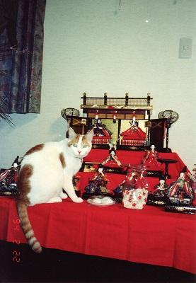 初代猫の花子さん
