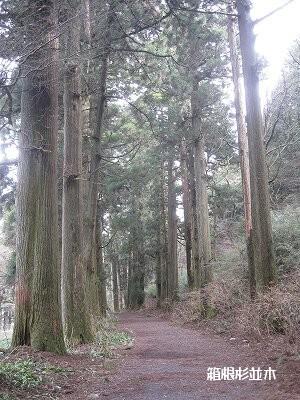 杉の太さが歴史を感じる