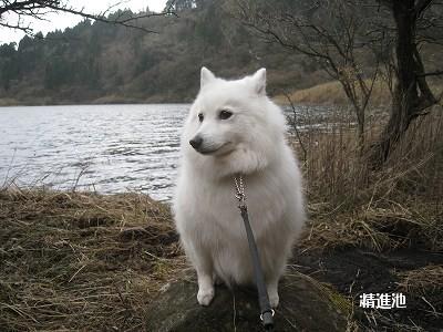 素敵な池に出会う