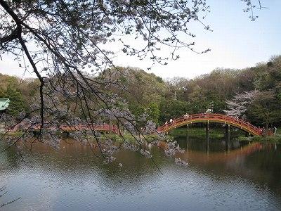 桜が似合う