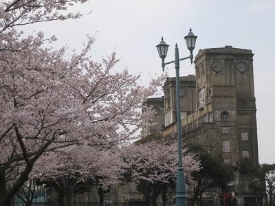 桜と一等観覧席