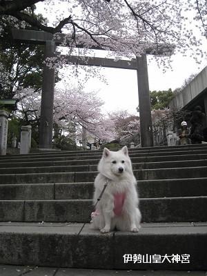 ザ・横浜的な神社です。