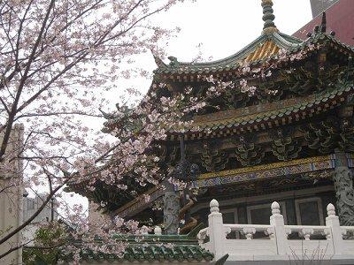 中国のお寺と桜