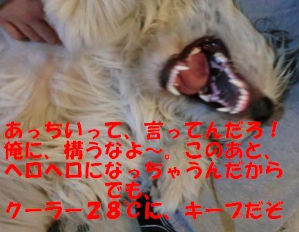 CIMG0311.jpg