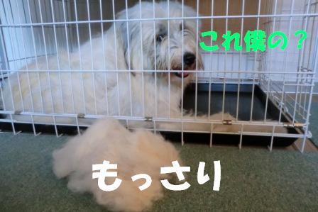 CIMG0410.jpg