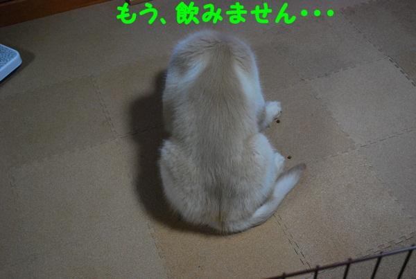 2011 06 06 04
