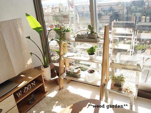 5 窓辺グリーン
