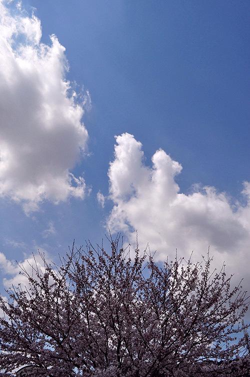 20120407-1.jpg