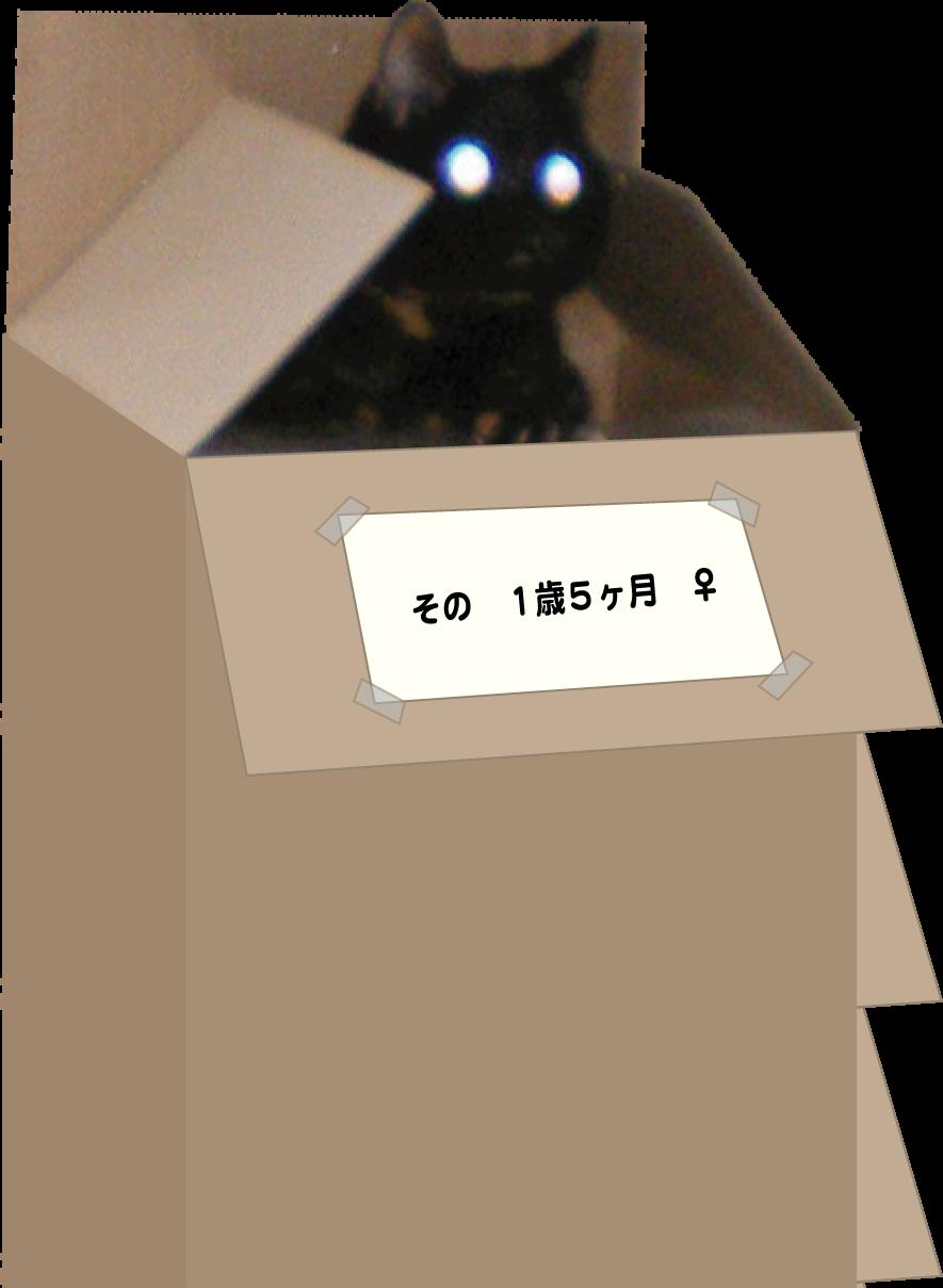 sonBOX捨