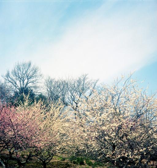 御津の、世界の梅公園。
