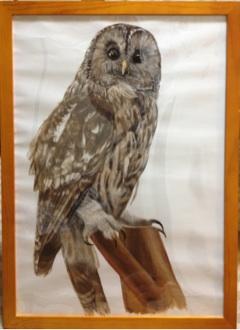 フクロウの剥製の水彩画
