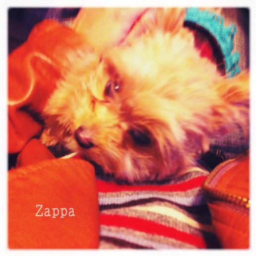 姫路zappa